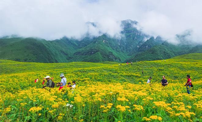 汉源万亩高山草甸山花烂漫  游客花海中欢乐消暑夏